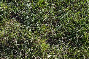 Gras-Texturen
