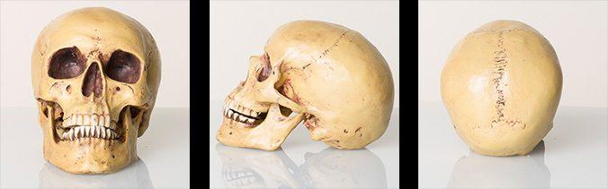 15 Totenkopf Bilder Reckordzeitstudio De